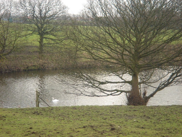 Swan Lake, Daisy Hill