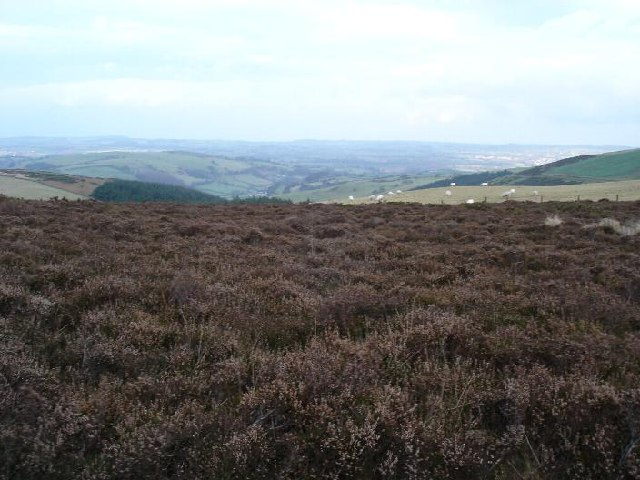 Heather clad Moel Arthur