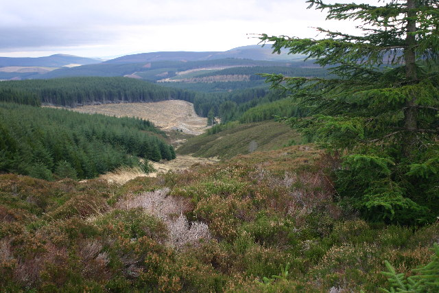 Forest view near Muckle Black Hill