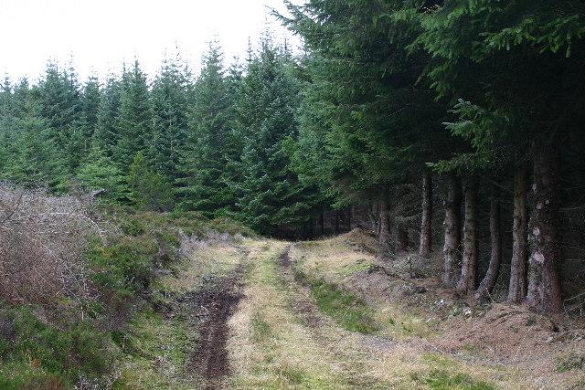 Forest track on Grumack Hill