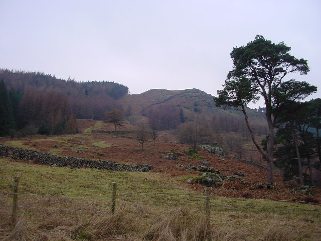 Brown Riggs From Thirlmere