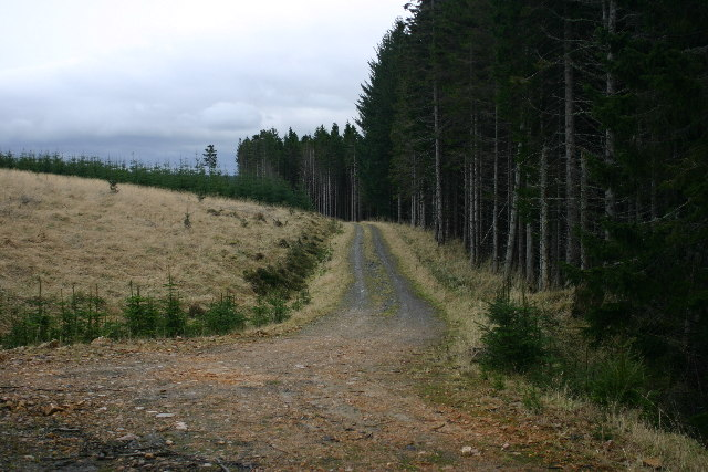 Forest track near Muckle Long Hill