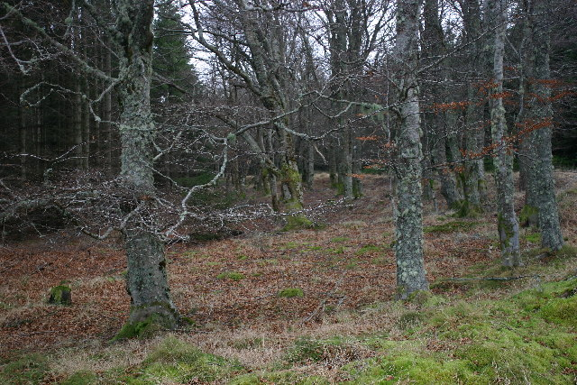 Trees on Muckle Long Hill