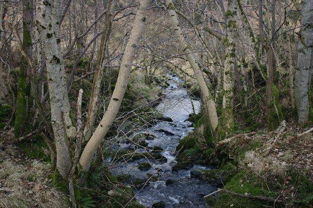 Glen Burn