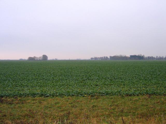 Farmland, Baston Fen, Lincs