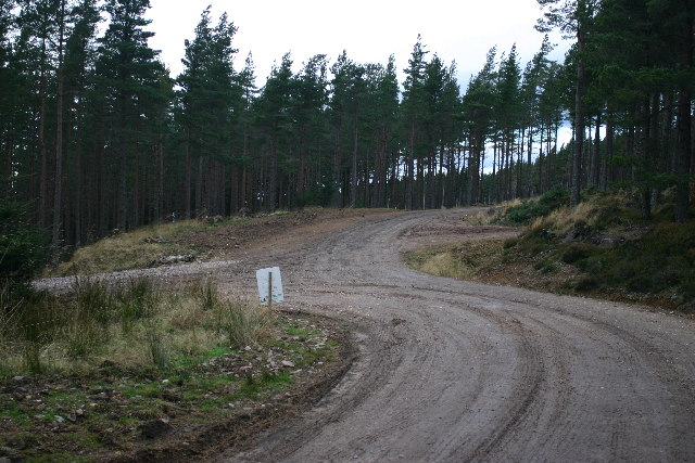 Forest roads on Hill of the Wangie