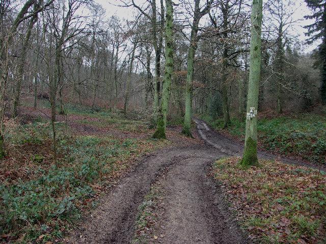 . Footpath junction in High Wood