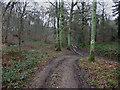 SU7597 : . Footpath junction in High Wood by David Ellis
