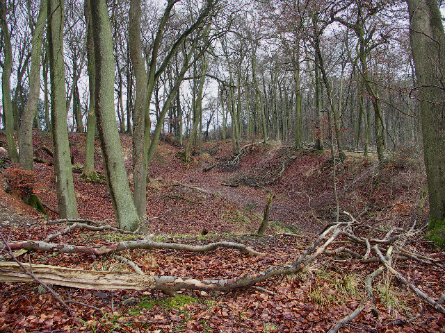 Sunken track in Crowellhill Wood
