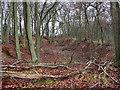 SU7598 : Sunken track in Crowellhill Wood by David Ellis