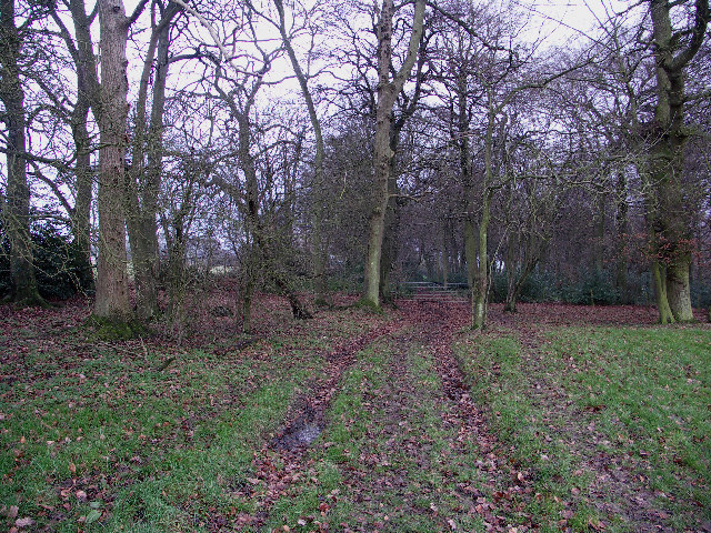 Benwell's Wood