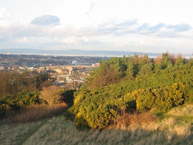 Gorse on East Craiglockhart Hill.
