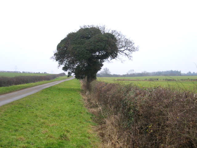 Hedgerow tree, Ashton, Peterborough