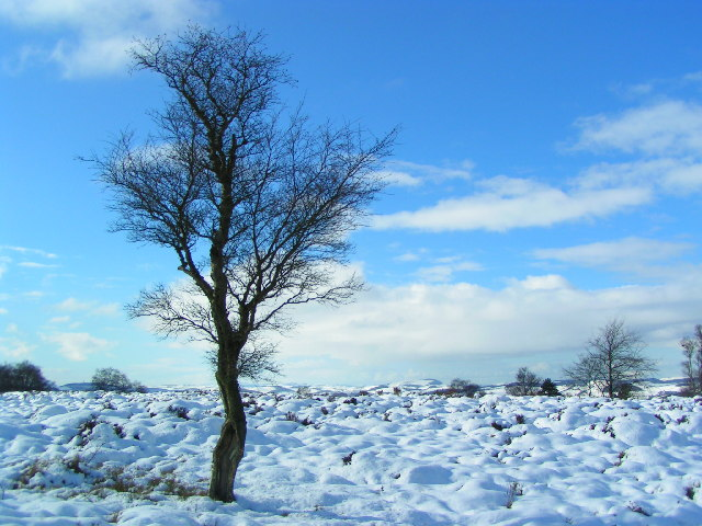 Lonesome tree on Lucklawhill, above Balmullo.