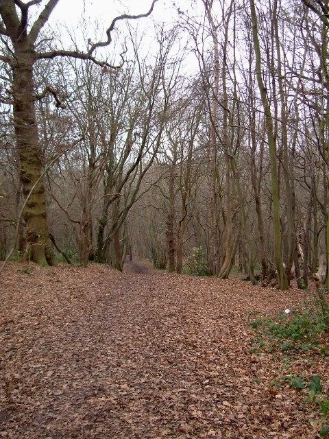 Bridleway Through Shipwrights Wood