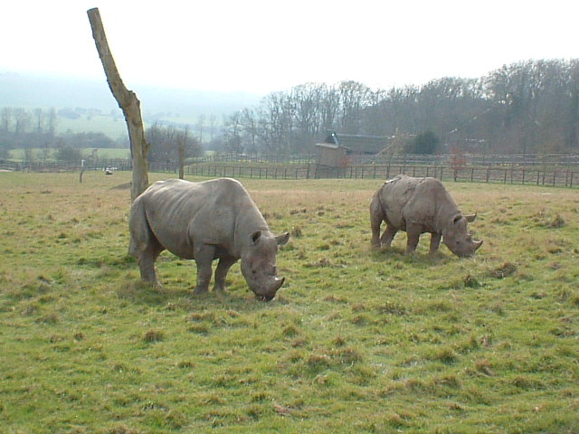 Port Lympne Wild Animal Park