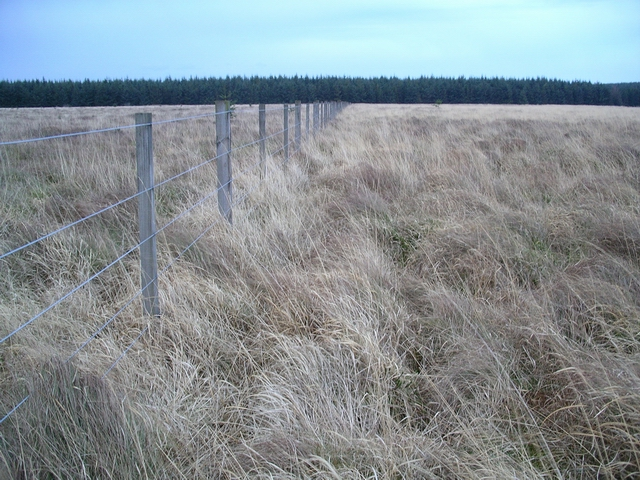 Fence (converging parallels), West Cairns Plantation