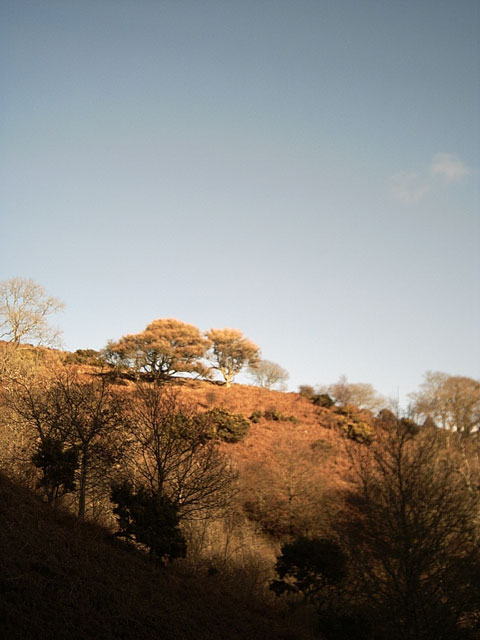 Winter Trees, Trentishoe
