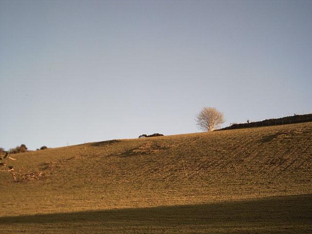Farmland on Nutcombe Hill