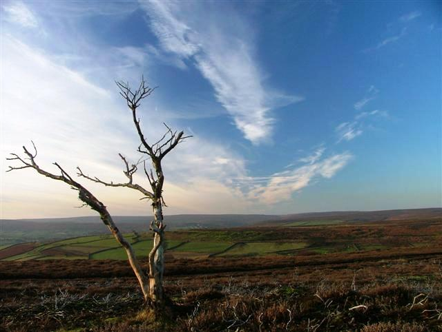 Dead Tree Above Clitherbeck