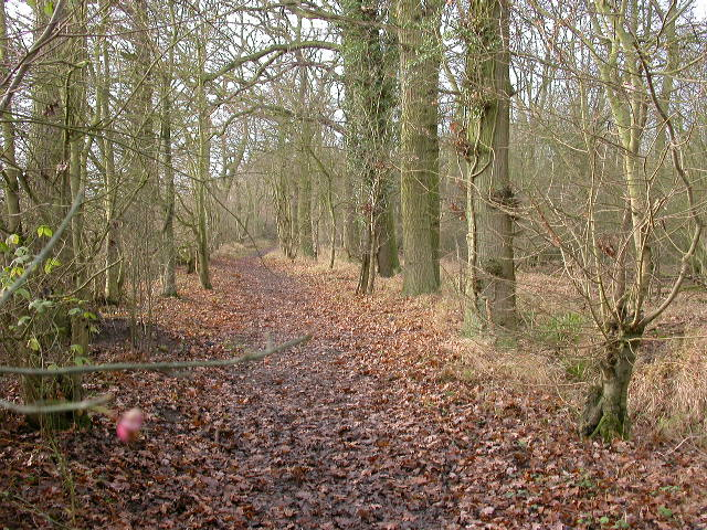 Hanger Wood
