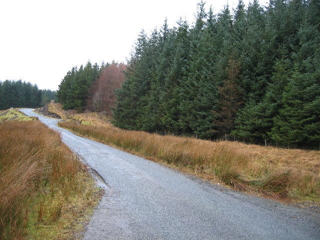 Glinne Bhig Forest