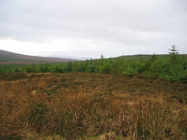 Forestry above Edinbane