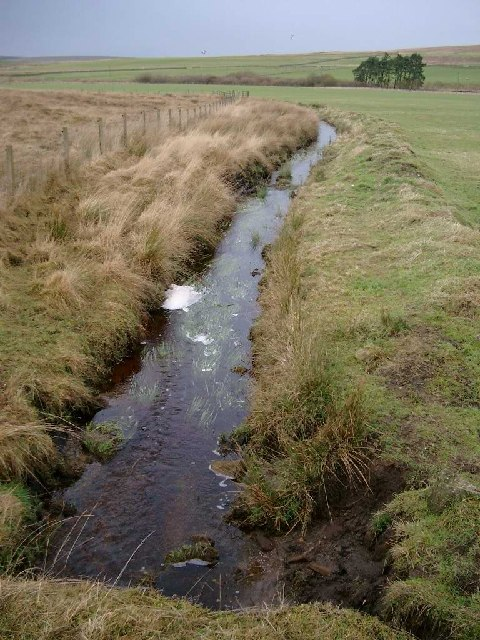 Minor tributary of the Greenock Water near Netherwood