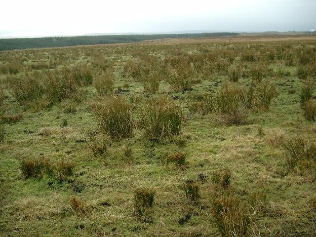 Moorland at Limmerhaugh Muir