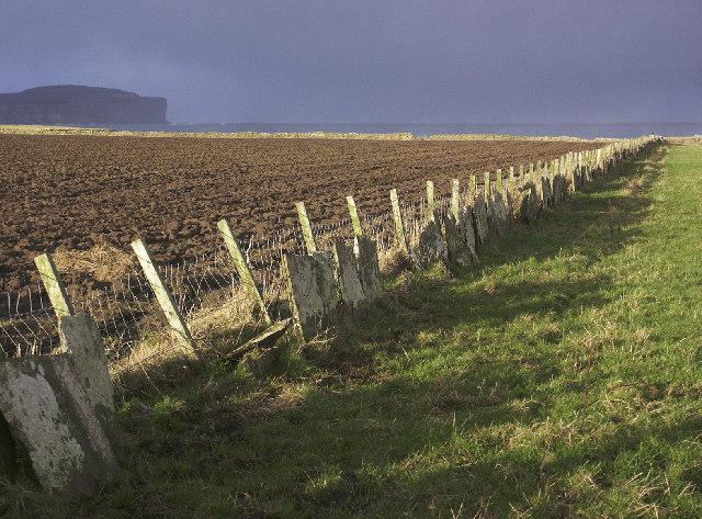 Farmland near Scarfskerry, Caithness