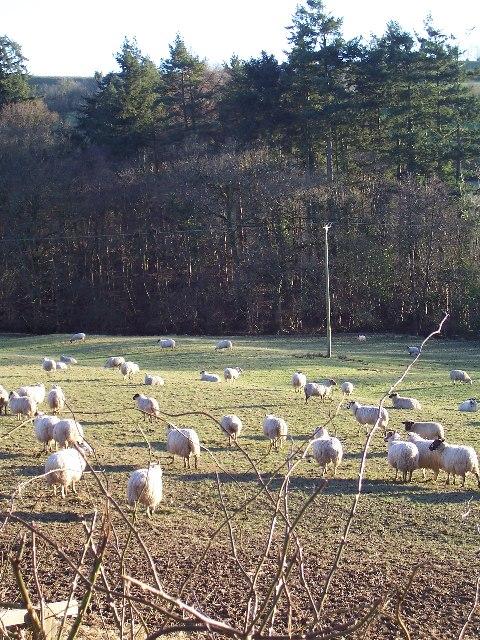 Farmland near Willishayes Farm