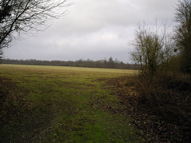 Winter Down Copse