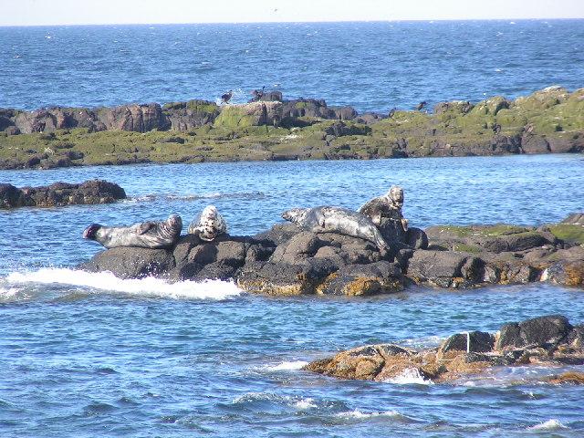 Isle Of May seals