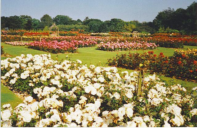 Rose Garden, Hazlehead