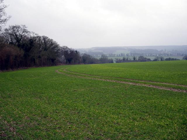 Fields above Little Somborne