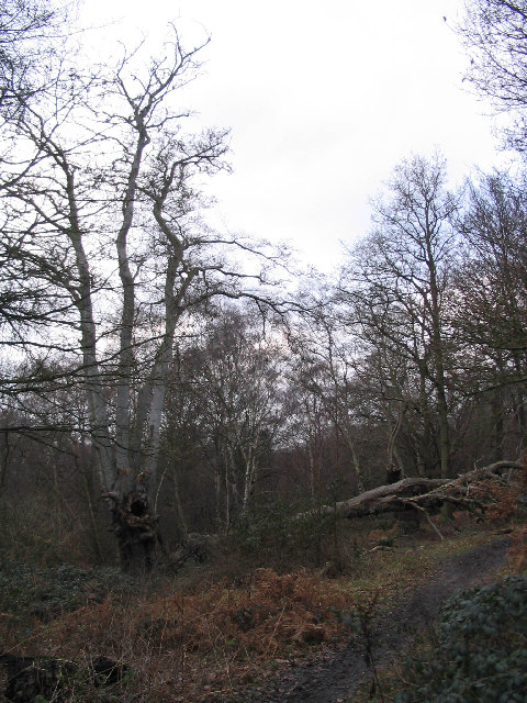 Epping Forest near Rushey Plain hut
