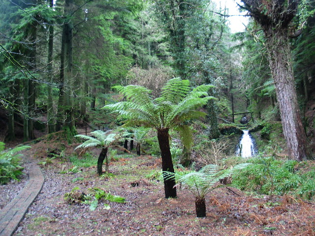 Crow Wood Path, Carradale.