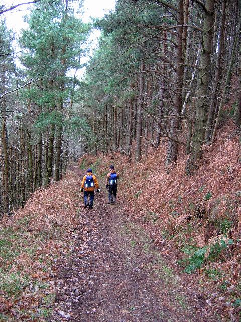Heading to Hingles Wood