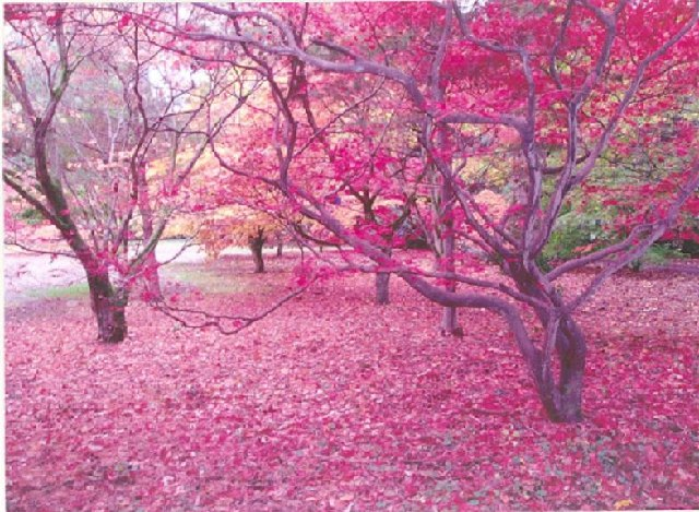 Westonbirt autumn 2004