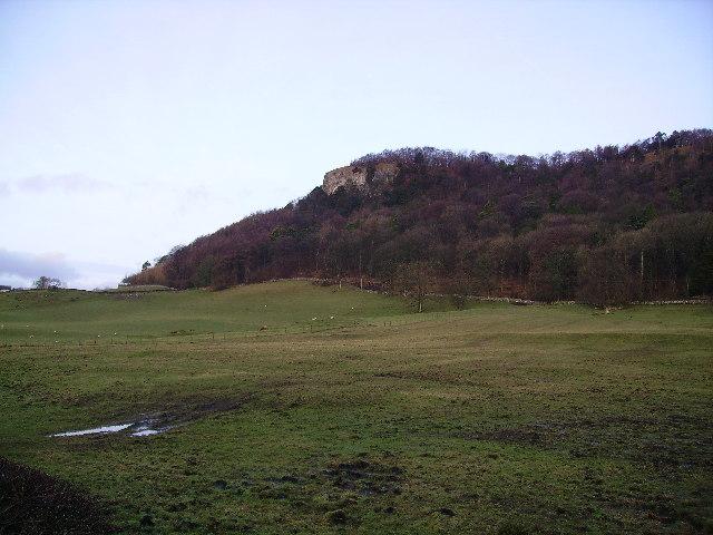 Buckhouse Wood