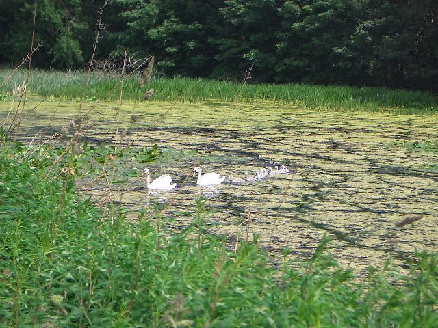 Howick Pond