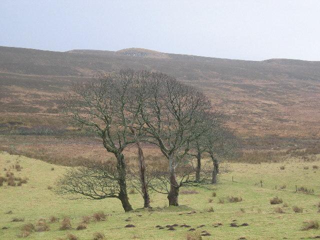 Unusual Trees at Balmeanach