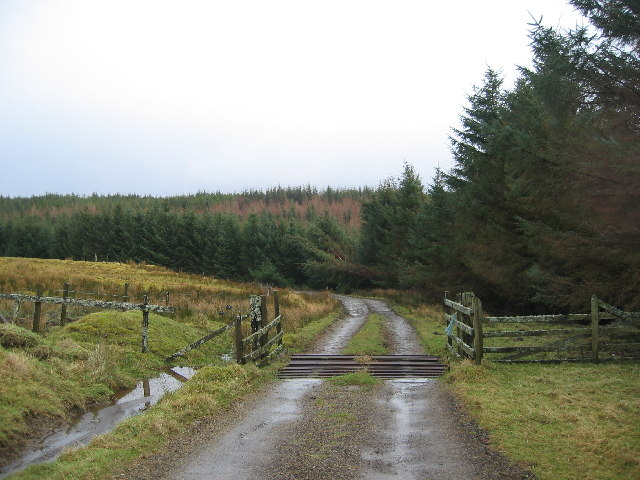 Forest Track in Glinn MhicAsgaill