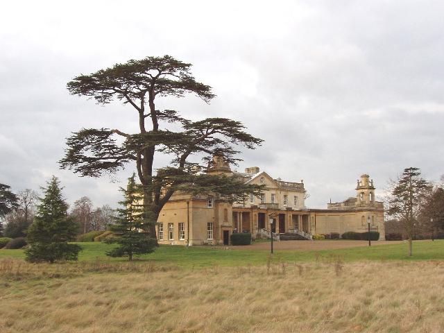 Langley Park Mansion, with cedar tree