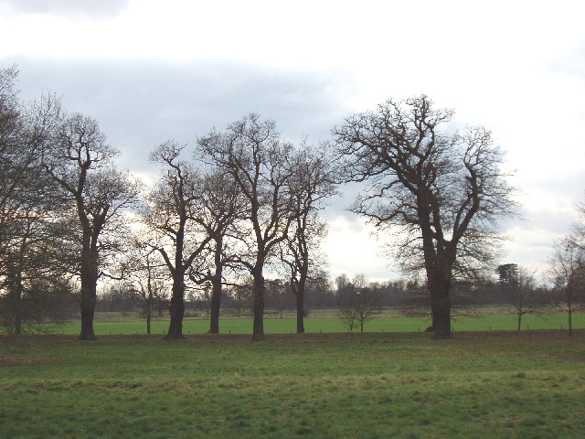 Parkland trees in silhouette, Langley Park