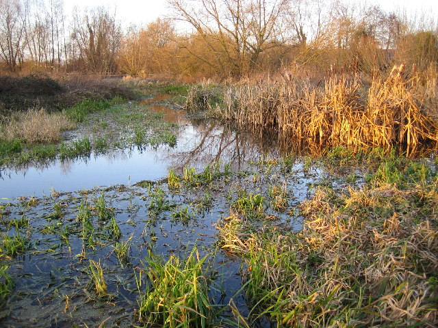 River Colne: Upstream of Troy Weirs