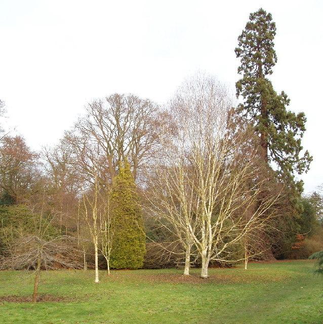 Langley Park arboretum