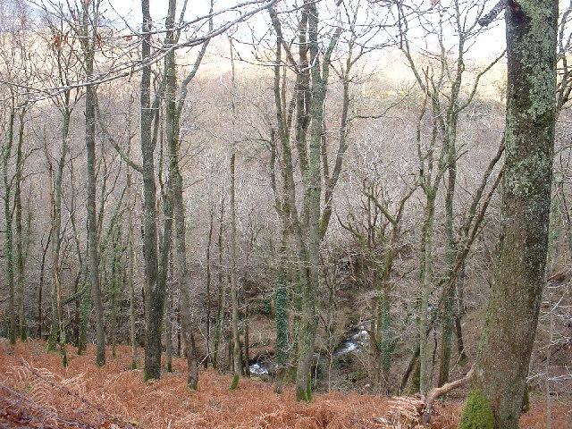 Woodland near Trawsfynydd