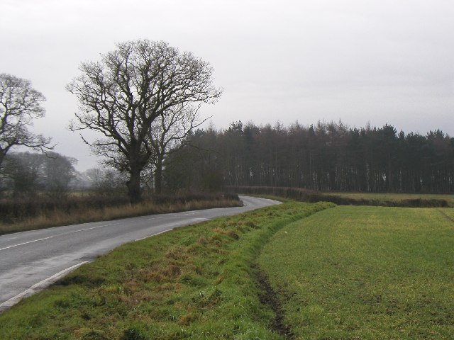 The road to Dodsworth Wood