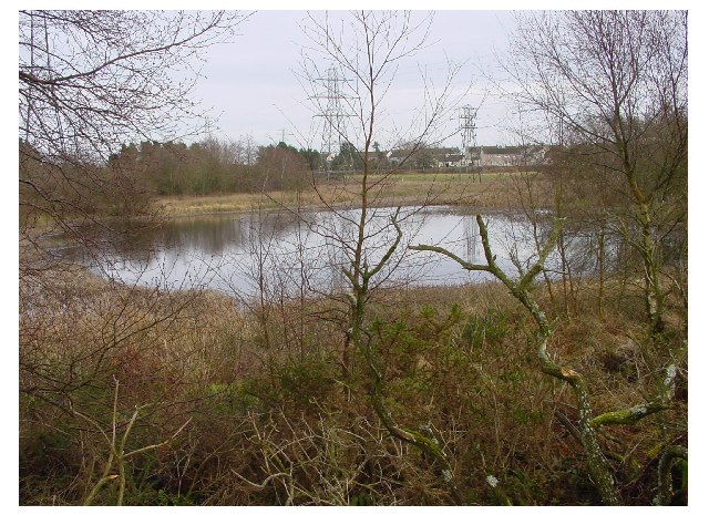 Pond at Broughton Moor